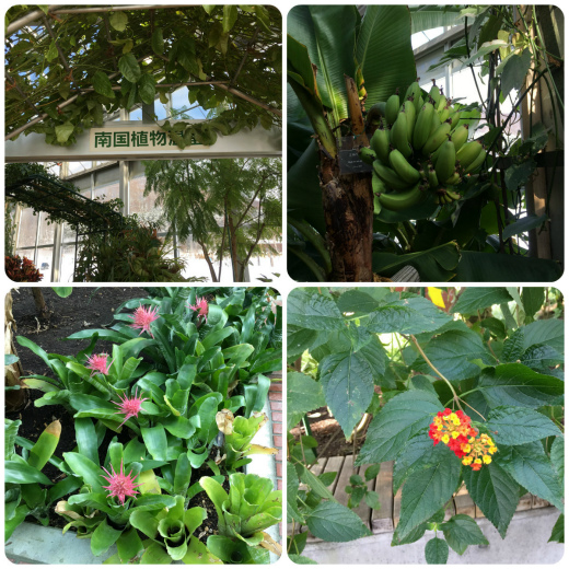 s-921-8南国植物温室