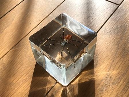 スズミグモの樹脂標本1