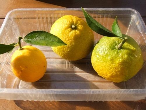 161120amanatu_lemon