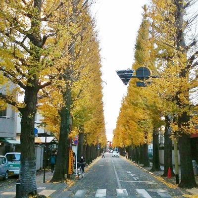 161128ityou_seijougakuen2