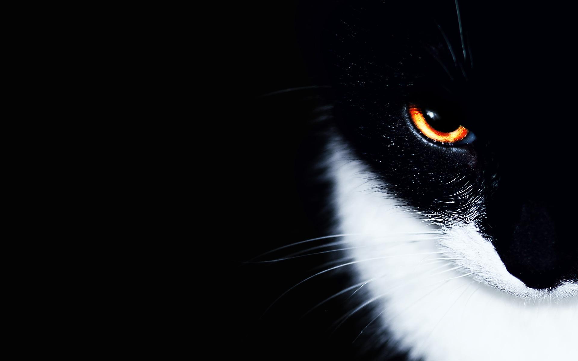 Cats_animals_orange_eyes_1920x1200.jpg