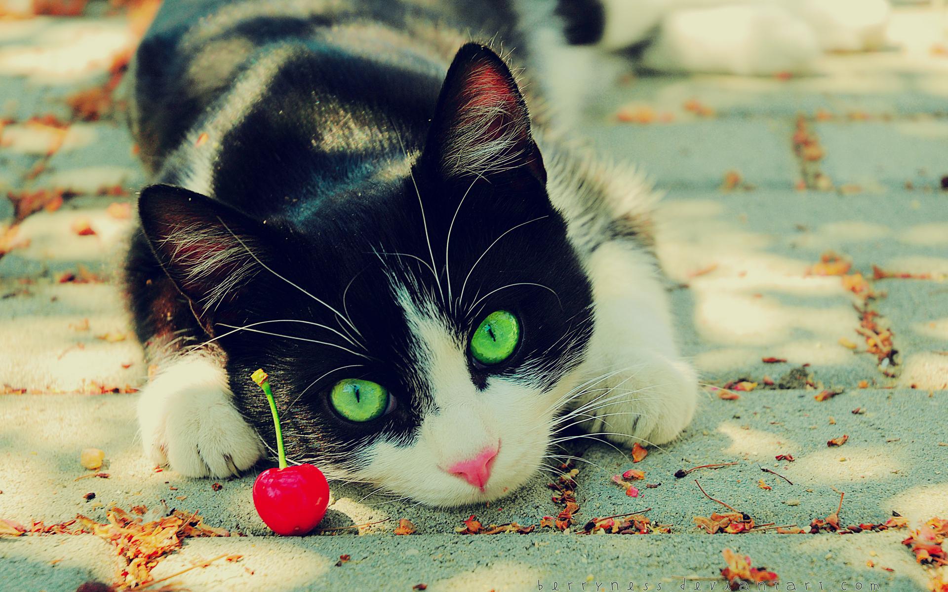 Nature_cats_animals_cherries_green_eyes_feline_pets_1920x1200.jpg