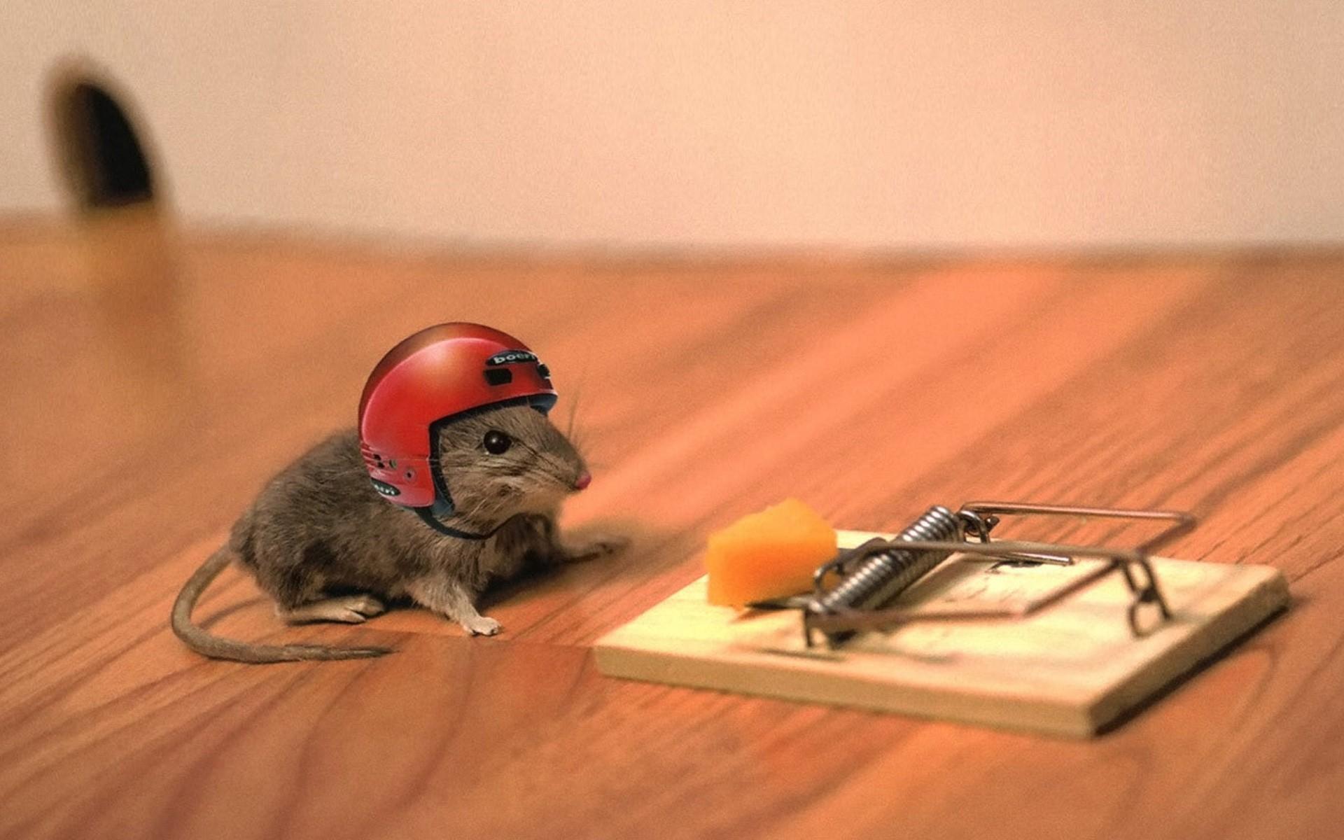 animals_helmets_mouse_trap_mice_1920x1200.jpg
