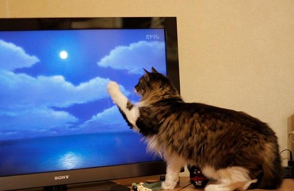 テレビっ子4