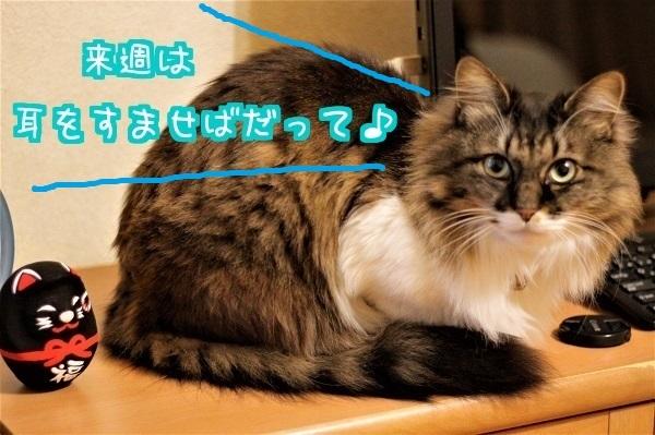 テレビっ子5