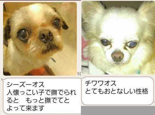 iwanaga-005-006.jpg