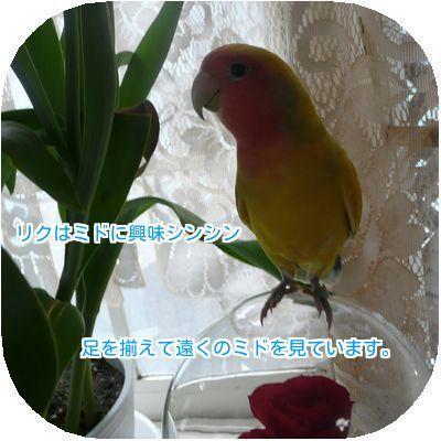 20161205155004d8e.jpg
