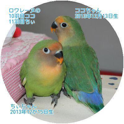 201612101211347b2.jpg