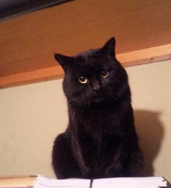 黒猫011201