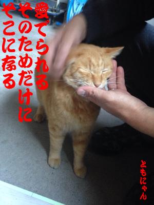 ごろ~にゃ(ともにゃん)image5