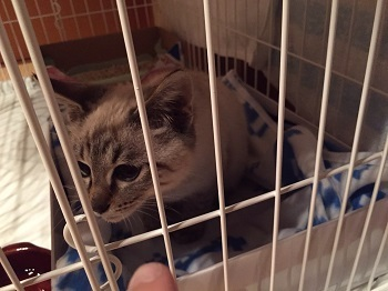 ニャアー保護猫  image5