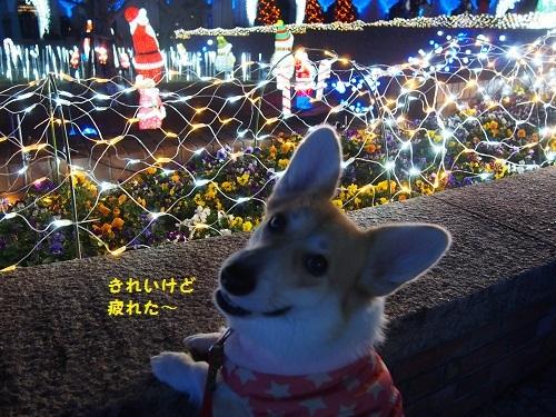 201612121545361fc.jpg
