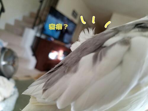 fc2_2017-02-02_06-46-58-894.jpg