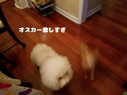 fc2_2017-02-07_07-47-23-987.jpg