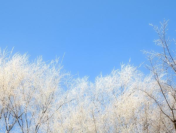 白い季節(面白くないタイトルだな~)