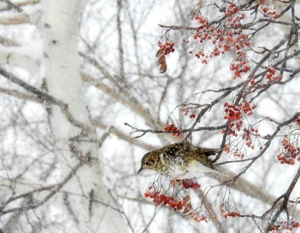 大雪でもトラちゃんが見られるなら・・・