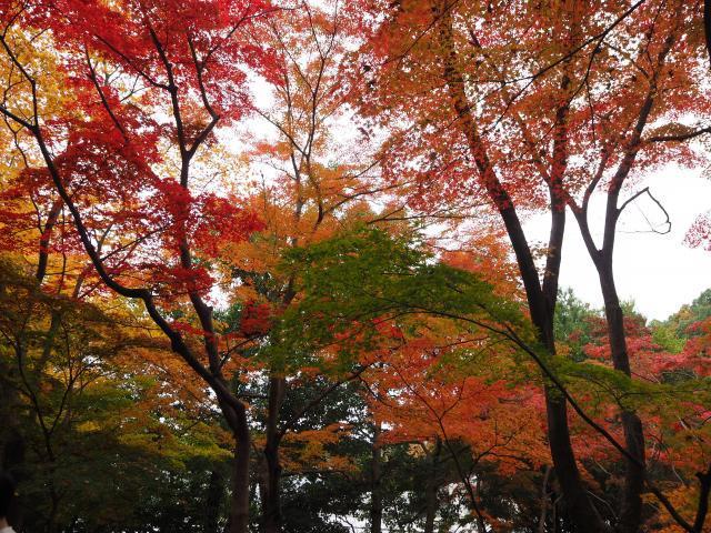 higashiyama20161120-4_convert_20161125203350.jpg