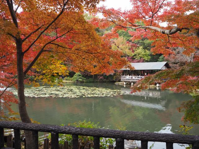 higashiyama20161120-8_convert_20161125203534.jpg