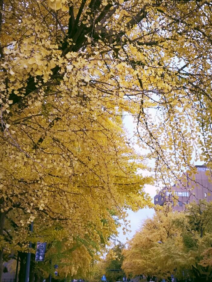 黄色い季節♪