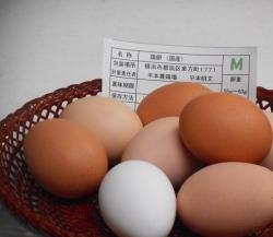 1月句会のお題「寒卵」