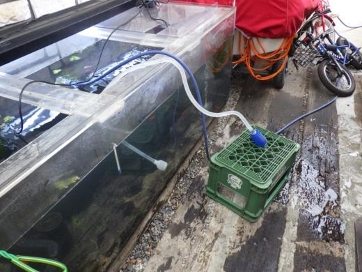 水槽水替え (4)