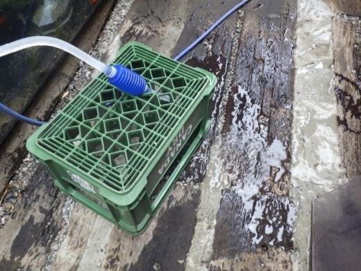 水槽水替え (5)