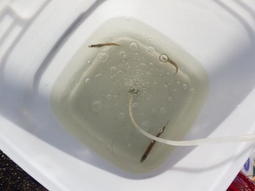 土浦港でワカサギ釣り (13)