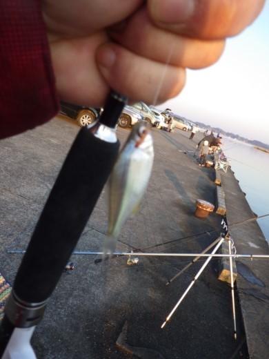 土浦港でワカサギ釣り (38)