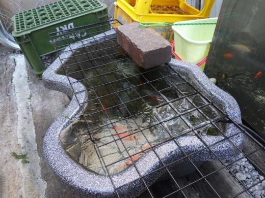 外水槽 (3)