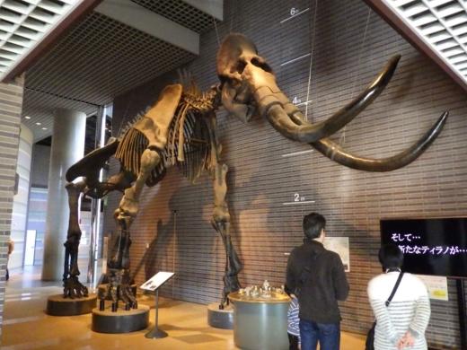 茨城県自然博物館 (5)
