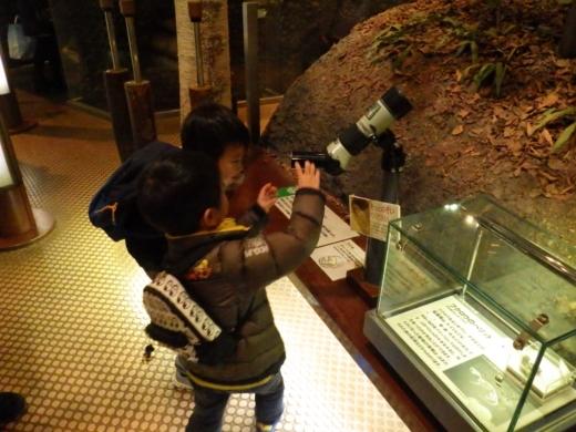 茨城県自然博物館 (10)