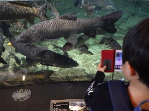 茨城県自然博物館 (13)