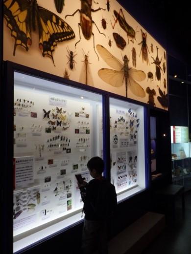 茨城県自然博物館 (17)