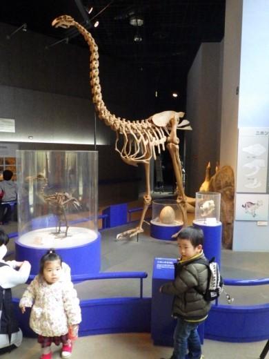 茨城県自然博物館 (20)
