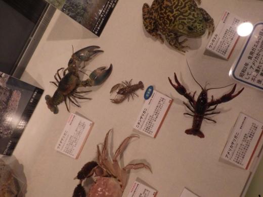 茨城県自然博物館 (26)