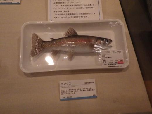 茨城県自然博物館 (28)