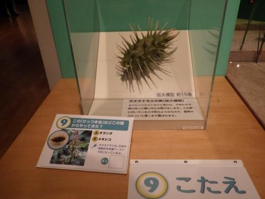 茨城県自然博物館 (29)