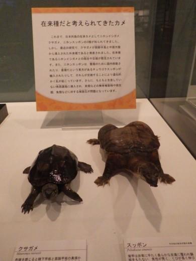 茨城県自然博物館 (31)