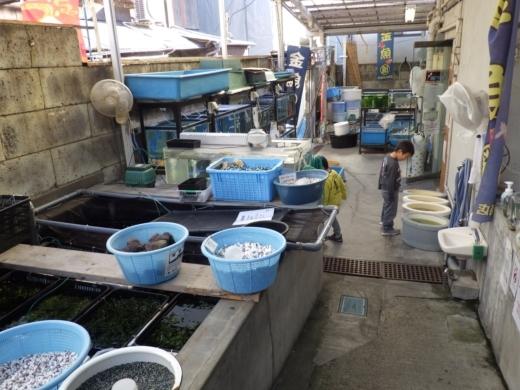 金魚坂へ (10)