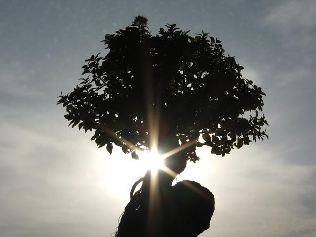 170115大樹