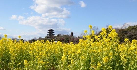 国分寺菜の花塔