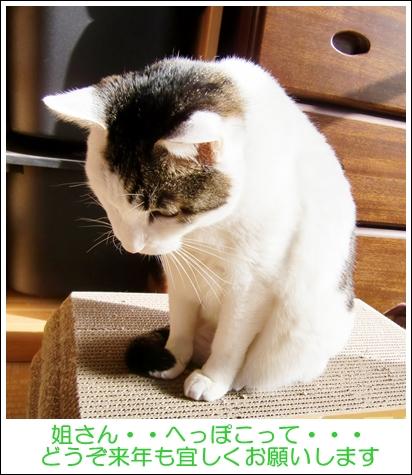 CIMG7174.jpg