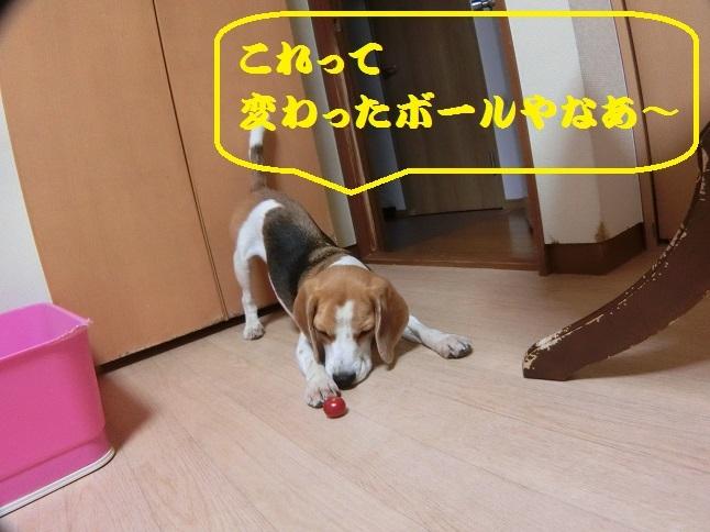 CIMG8944.jpg