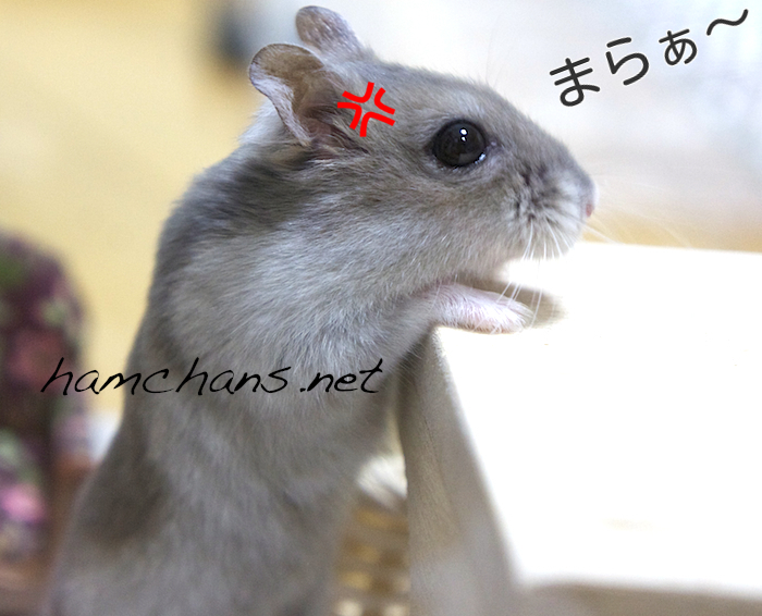 スマホ代が1ヶ月500円に!!!