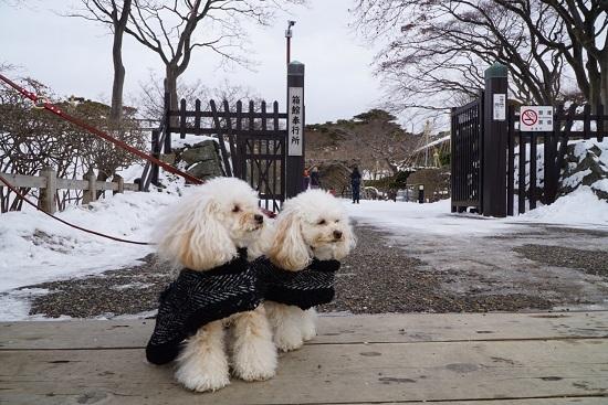 真冬の五稜郭公園へお散歩2