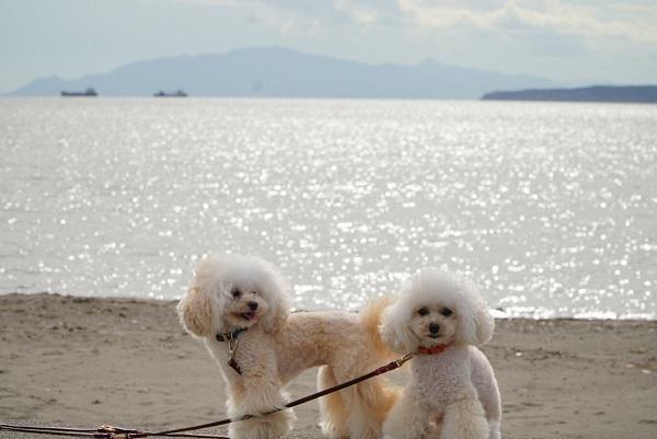 七重浜ビーチ2