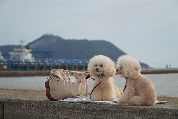 七重浜ビーチ3