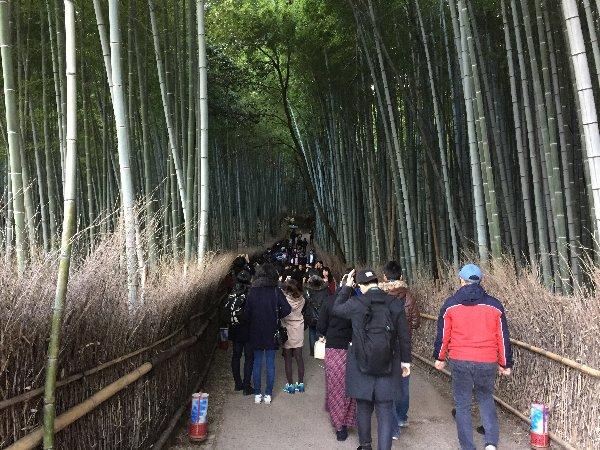 chikurin-arashiyama-002.jpg