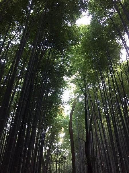 chikurin-arashiyama-013.jpg
