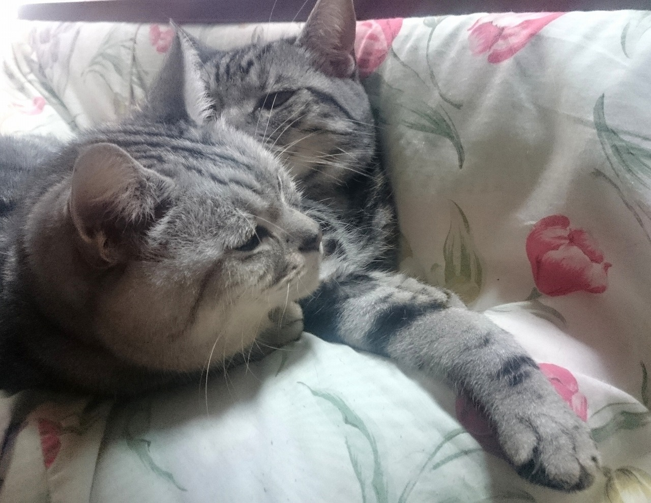 20161202-Cats-X06.jpg